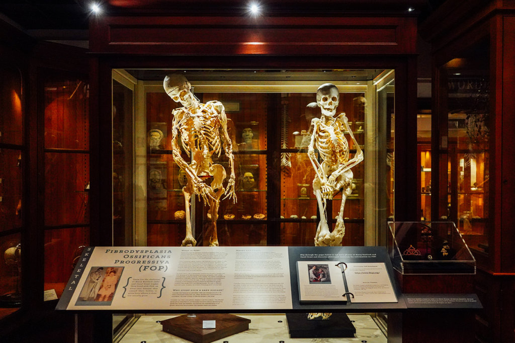 mutter museum medical oddities