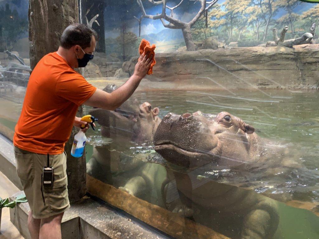 adventure aquarium hippos